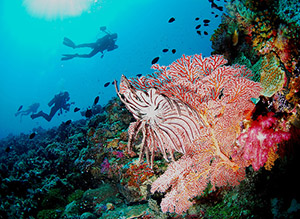 Coral reef, pacific, diversity