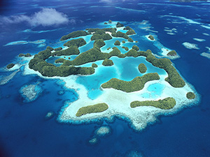 Palau islands, Pacific coral reef
